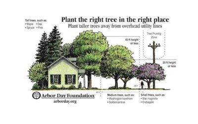 Landscaping with Utility Friendly Trees